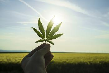 CannTrust Hires Advisor for Review, Could Result in Sale: https://g.foolcdn.com/editorial/images/533682/marijuana-leaf-held-up-against-the-sky.jpg
