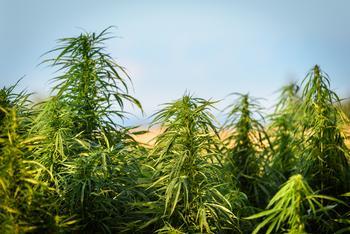 2 Best Cannabis Stocks to Buy in August: https://g.foolcdn.com/editorial/images/533973/outdoor.jpg